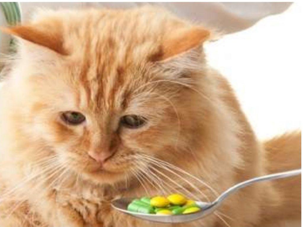 Suplementação de Gatos
