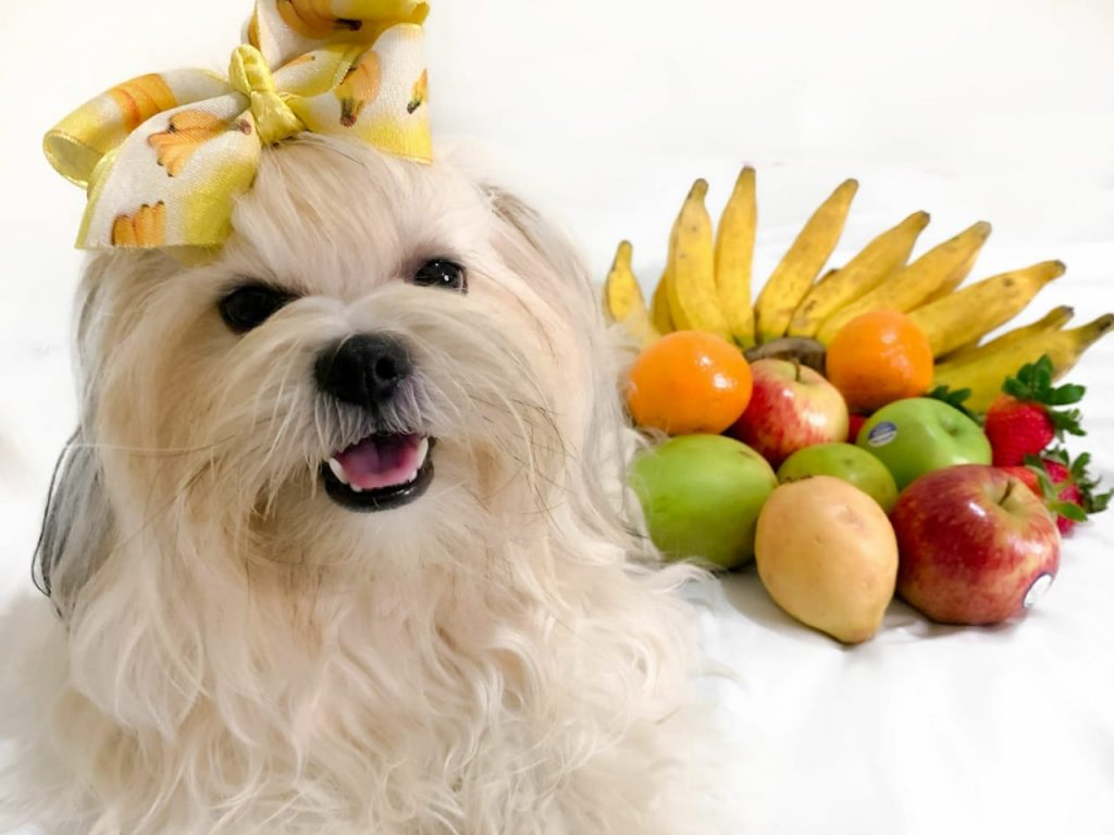 Cachorro pode comer frutas
