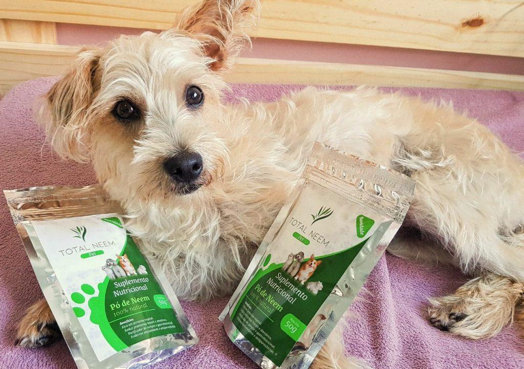 gastrite em cães
