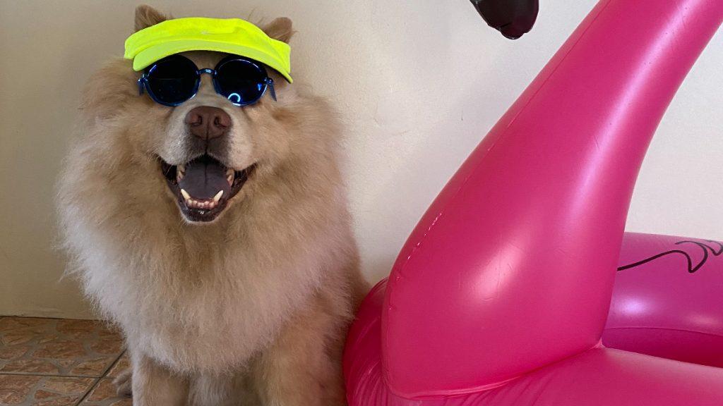 Cuidados com cachorro no verão