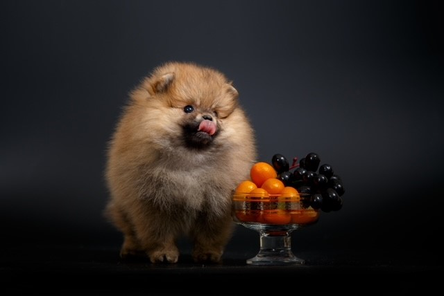Frutas que cachorros podem comer