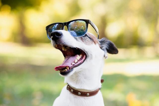 Como os cachorros enxergam