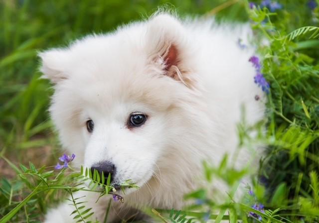 sentidos dos cachorros