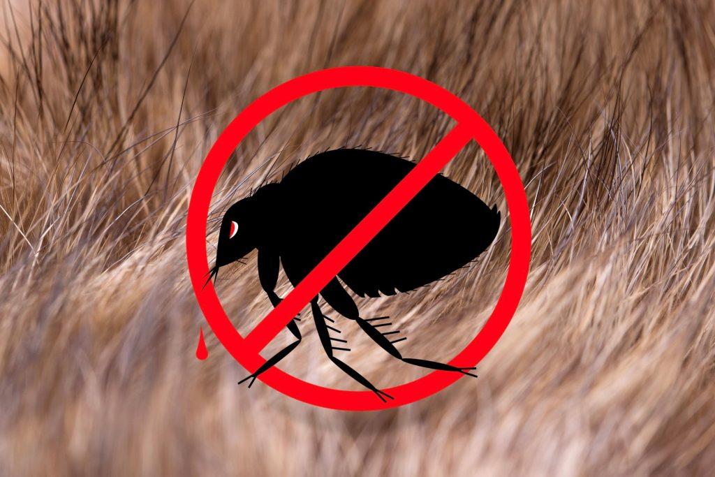 Como acabar com pulgas do ambiente utilizando os produtos da Total Neem